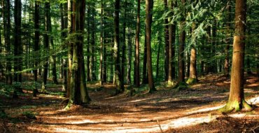 Numero verde per segnalazioni ambientali